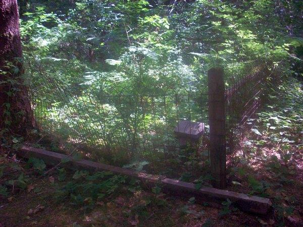 An overgrown plot in the Hamlet Cemetery in Clatsop County