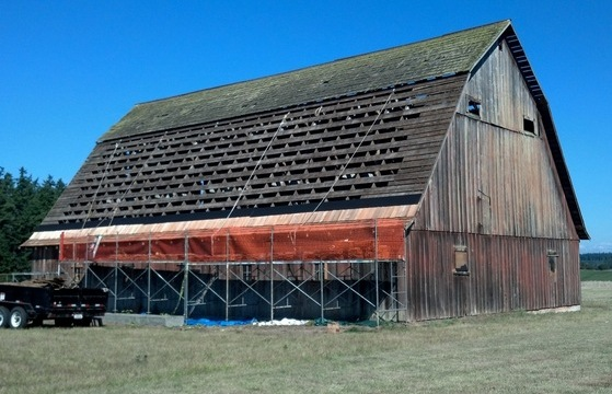 Now that's a big roofing job! New shakes are installed on the Comstock Barn.